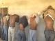 اتهمت منظمة هيومن رايتس ووتش في فبرايرالماضي الأمن السوداني بالتواطؤ مع عصابات الإتجار بالبشر.